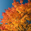 Foliage : Shots of the beautiful fall in New England.
